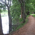 Pathway by Sandun Somarathna