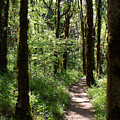 Pathway Through The Woods by Ben Upham III