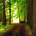 Pathway To Light by Steve Ohlsen
