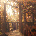 Pathway by Wim Lanclus