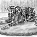 Patience - Doberman Pinscher And Puppy Print by Kelli Swan