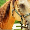 Patient Horse by Meagan Davis
