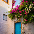 Patmos Bougainvillea by Inge Johnsson