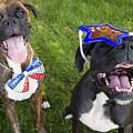 Patriotic Pups by Stephanie McDowell