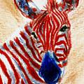 Patriotic Zebra Aceo by Brenda Thour