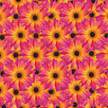 Pattern Of African Daisies by Sheila Fitzgerald