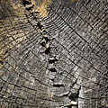 Pattern On An Old Stump by Jozef Jankola