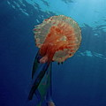 Patterned Luminescent Jellyfish by Sami Sarkis