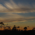 Patterned Skies by Nicho Rivera