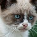 Pauls Little Cat by Heiko Koehrer-Wagner
