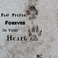 Paw Prints Forever In Your Heart by Fiona Kennard