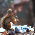 Paws For A Free Meal by Jeff Folger