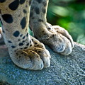 Paws For Effect by Gene Sizemore