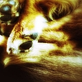 Paws For Thought by Abbie Shores
