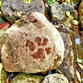 Paws On The Rocks by Bonny Puckett