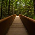 Peace Bridge by Dustin  LeFevre