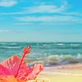 Peace Love And Aloha by Sharon Mau