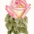 Peace Rosebud by Alexis Grone