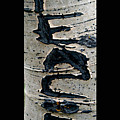 Peace Written In The Trees 4 by Tamara Kulish
