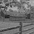 Peaceful Farm by Sharon Mayhak