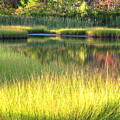 Peaceful Marsh by Sybil Staples