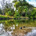 Peaceful Morning On Cibolo Creek by Lynn Bauer