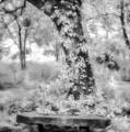 Peaceful Rest-bw by Joye Ardyn Durham