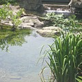 Peaceful Stream by Jill Ballard