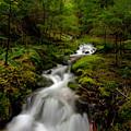 Peaceful Stream by Mike Reid