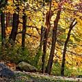 Peaceful Trees by Renee Longo