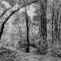 Peaceful Trees by Yaya UrsRich Ursula Richards