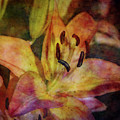 Peach And Yellow 2625 Idp_2 by Steven Ward