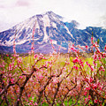 Peach Blossoms And Mount Lamborn II by Anastasia Savage Ealy