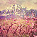 Peach Booms And Mount Lamborn by Anastasia Savage Ealy