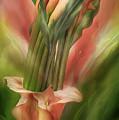 Peach Calla Lilies In Calla Vase by Carol Cavalaris