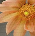 Peach Dahlia by Sharon Foster