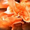 Peach Ripples by Lisa Kilby