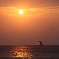 Peach Sunrise And Bird In Flight by Nadine Rippelmeyer