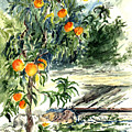 Peach Tree by Lily Hymen