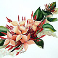 Peachy Ixora by Karin  Dawn Kelshall- Best