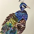 Peacock  by Aysel Mekhtieva