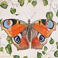 Peacock Butterfly-jp3878 by Jean Plout