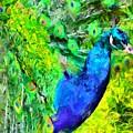 Peacock by Caito Junqueira