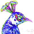 Peacock Closeup by Jeelan Clark