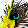 Peacock Feather And Gladiola 3 by Sarah Loft
