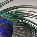 Peacock Feather Art by Angela Murdock