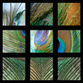 Peacock Feather Mosaic by Lisa Knechtel