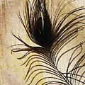 Peacock Feather Silhouette by Sarah Loft