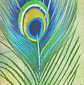 Peacock Feathers-jp3609 by Jean Plout