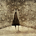 Peacock Grunge by Alice Gipson